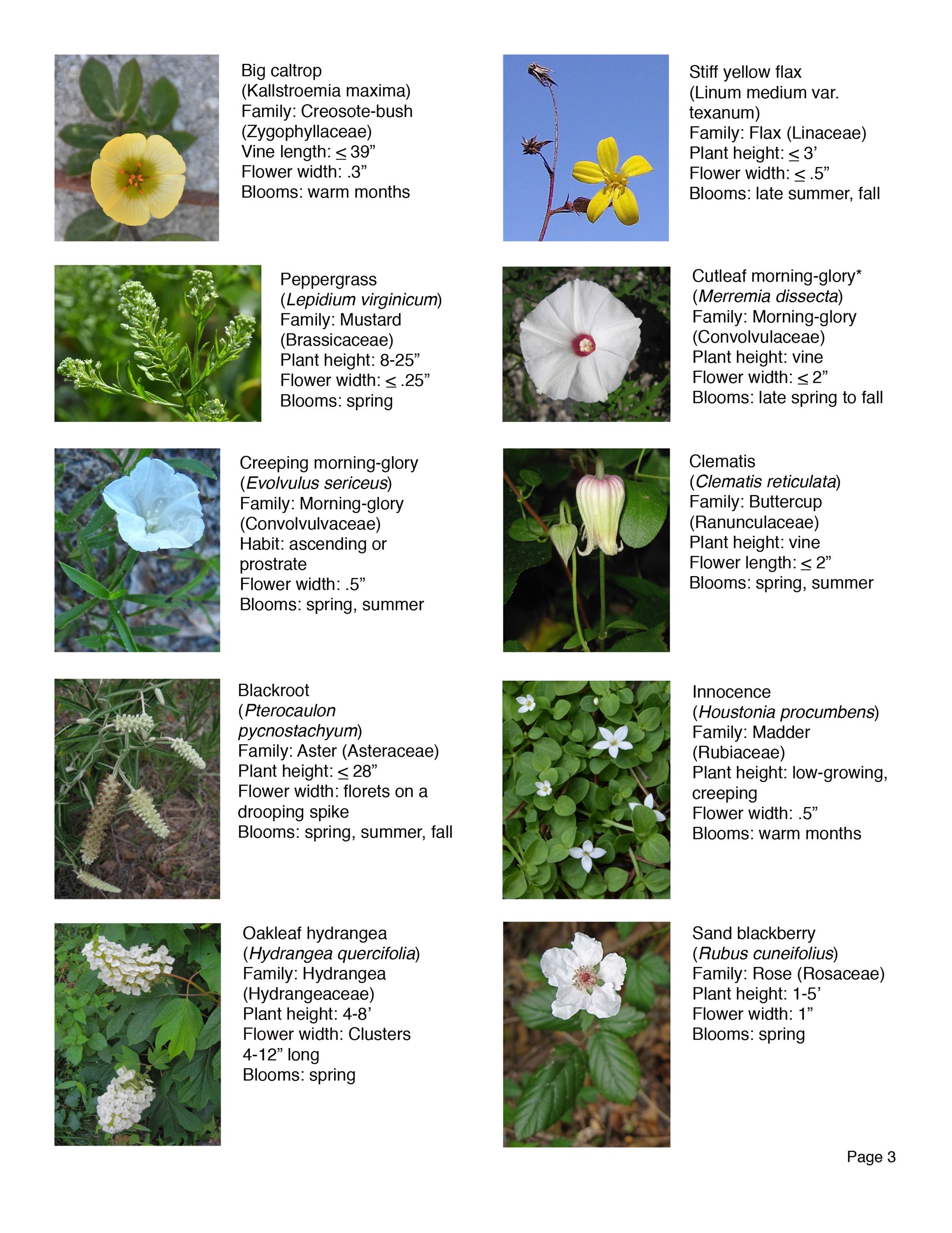 Water Works EEC Wildflower Brochure page 3