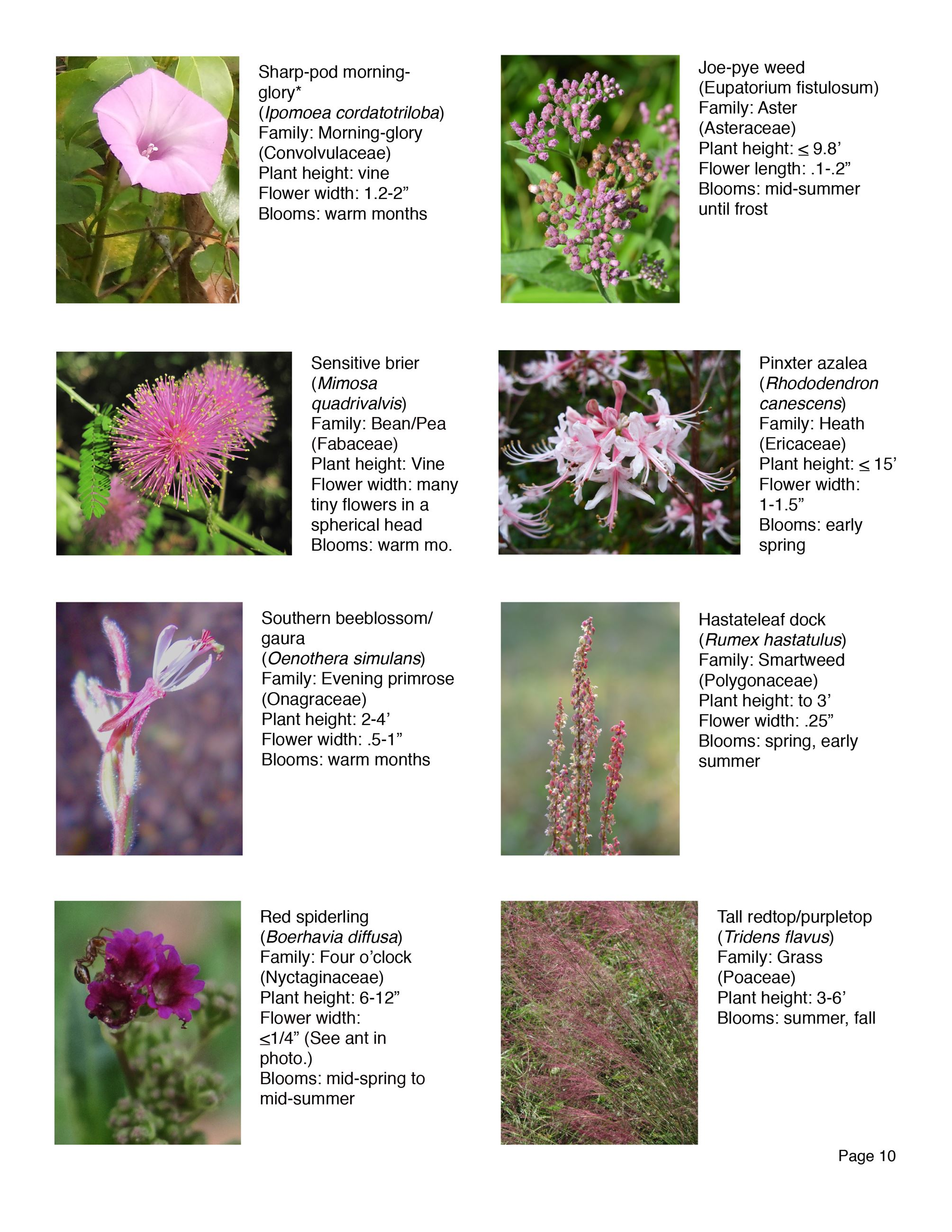 Water Works EEC Wildflower Brochure page 10